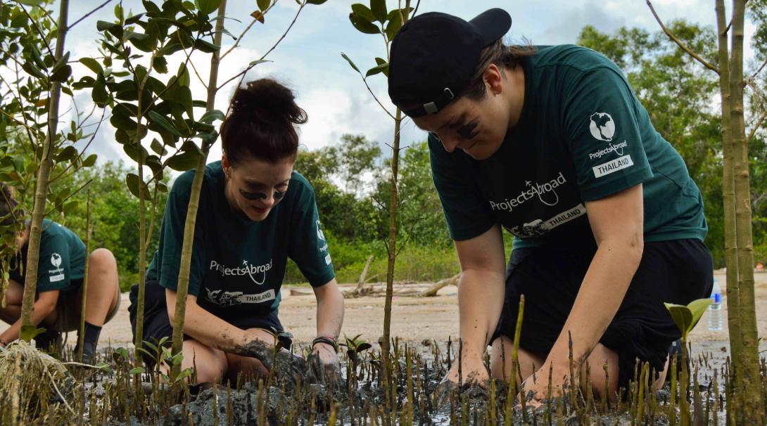 Voluntarios trasplantando manglares en Tailandia